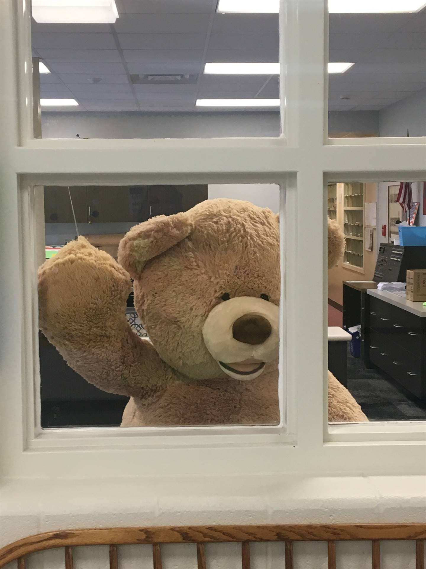 Teddy bear waving hello through window