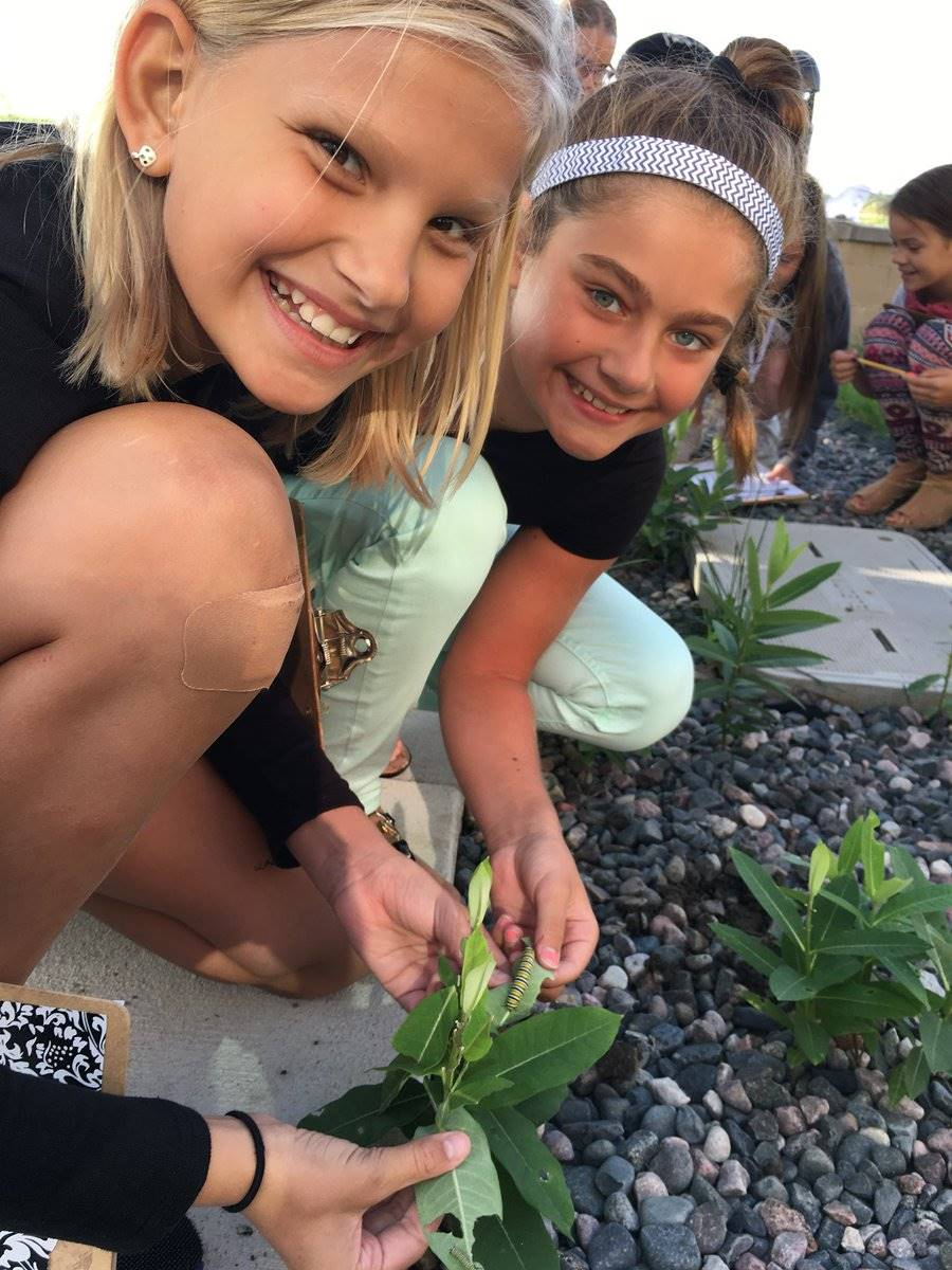 STEM in Action (Monarch Butterfly Research)