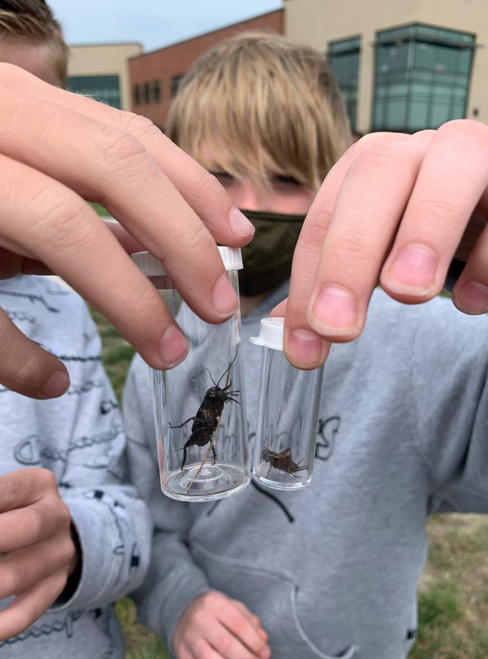 Prairie Insect Study