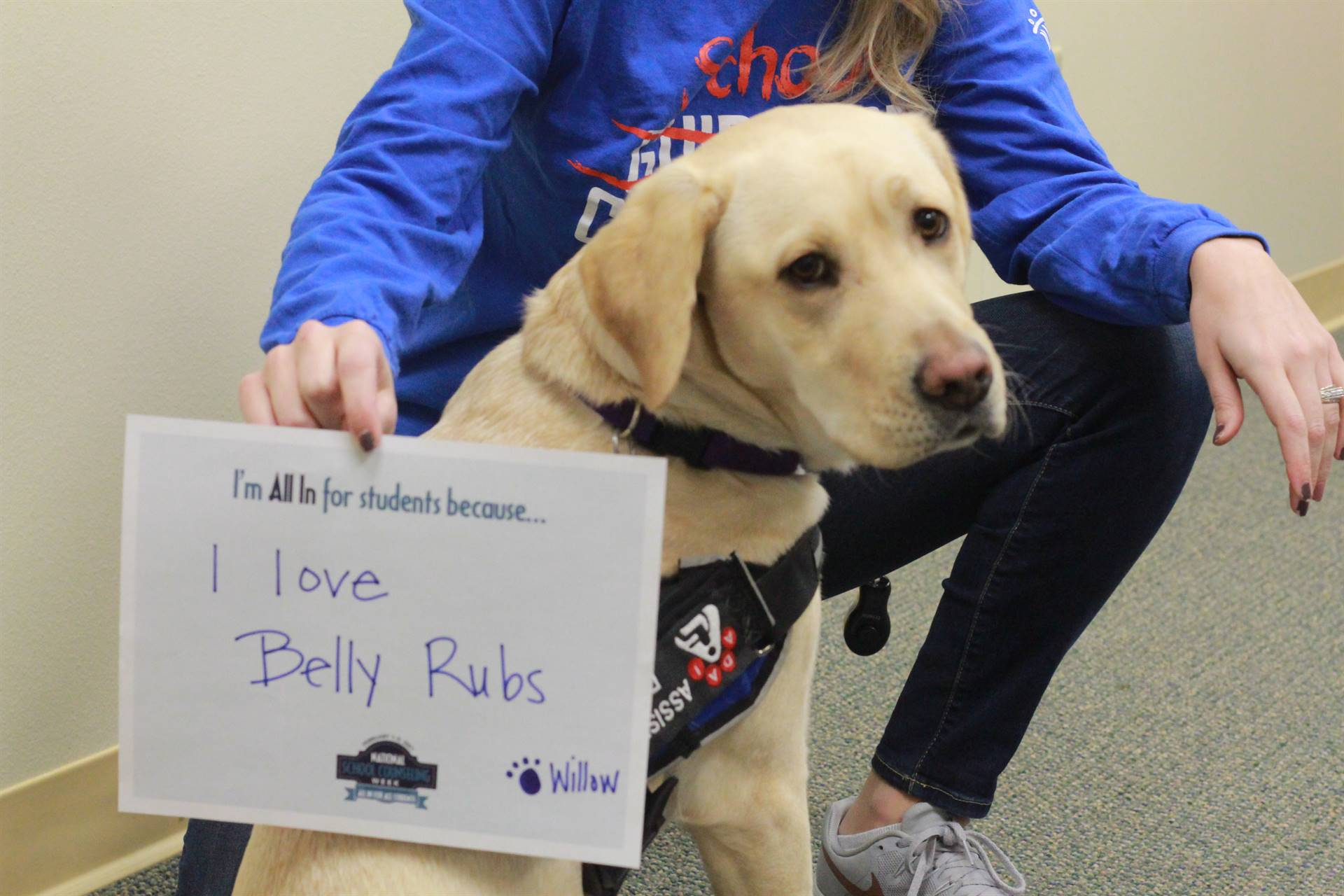 Willow School Therapy Dog in Training